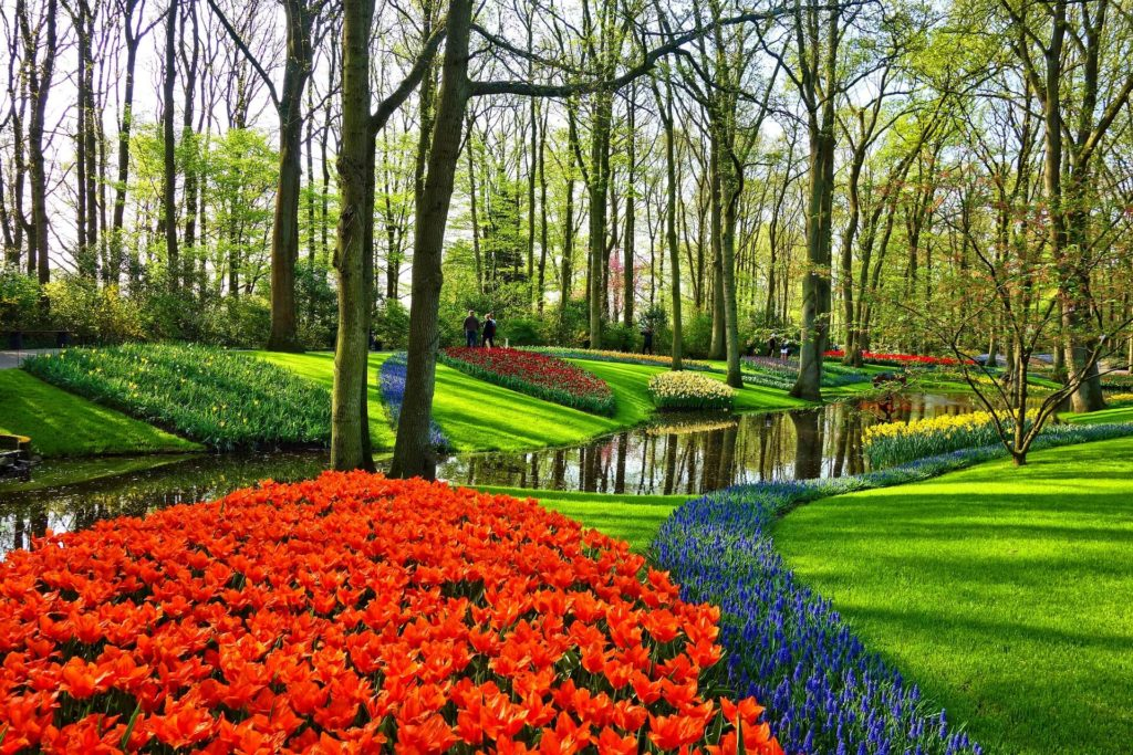 Een schitterende tuin in de zomer