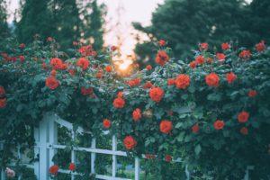 Geniet ieder jaargetijde van een mooie tuin