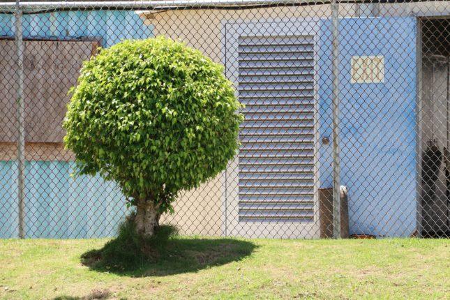 Zelf een boom snoeien