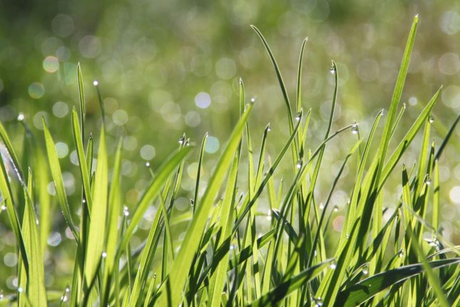 voordelen gras